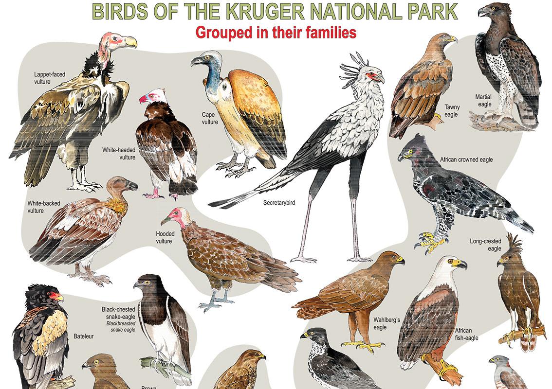 Kruger National Park clipart #1, Download drawings