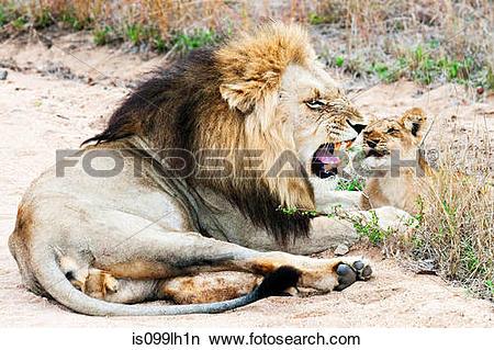 Kruger National Park clipart #8, Download drawings