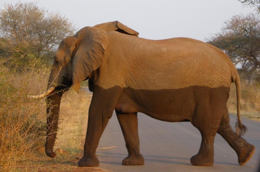Kruger National Park clipart #2, Download drawings