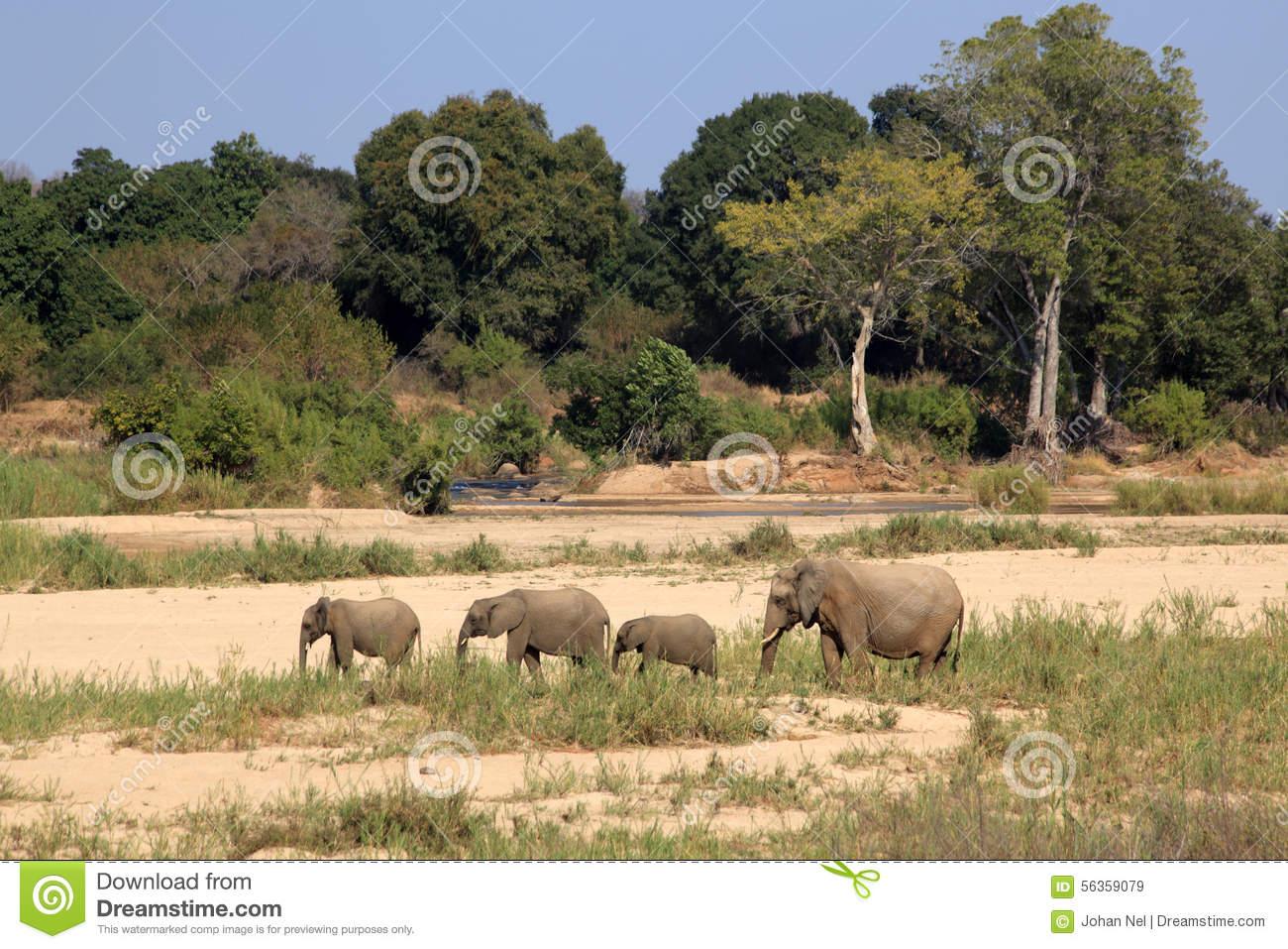 Kruger National Park clipart #19, Download drawings