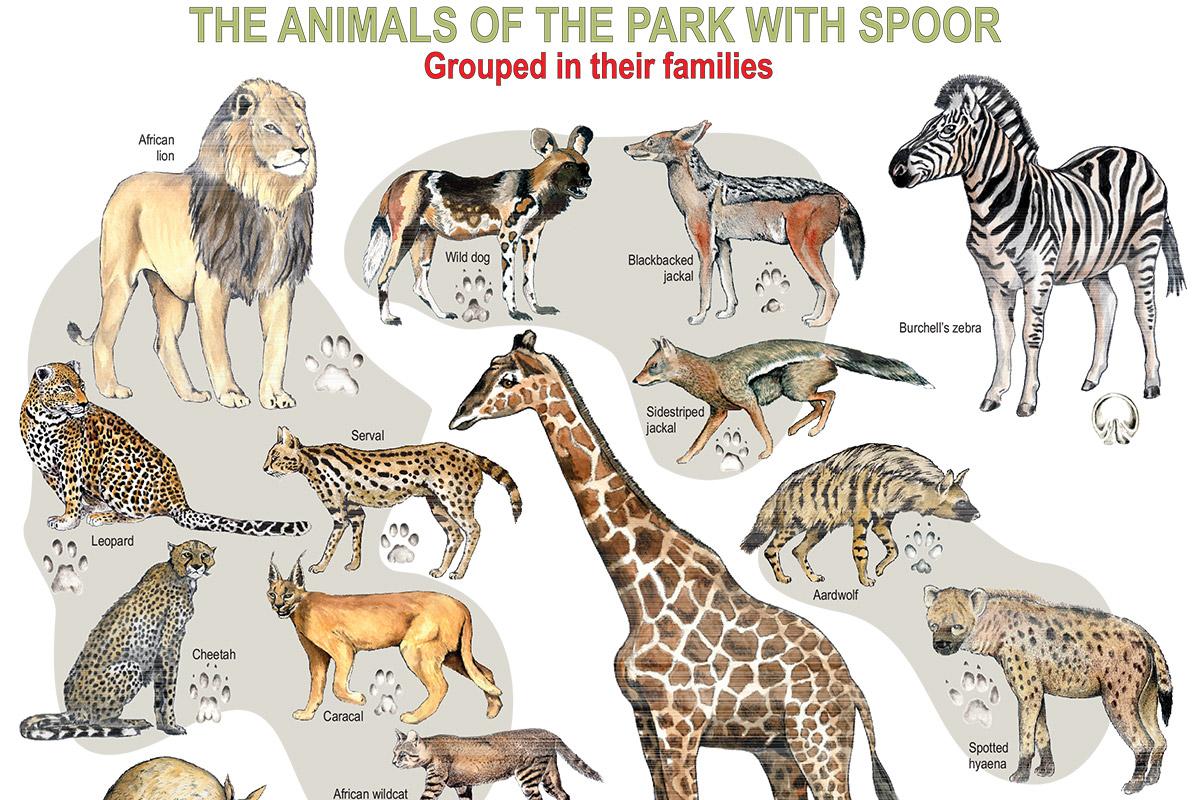 Kruger National Park clipart #3, Download drawings