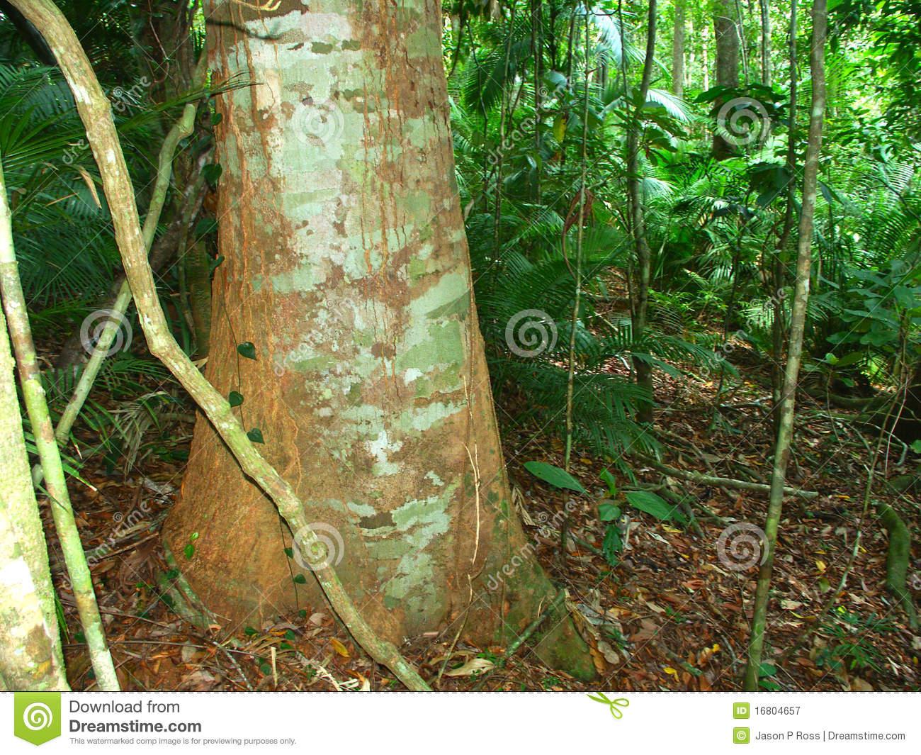 Kuranda Rianforest clipart #20, Download drawings