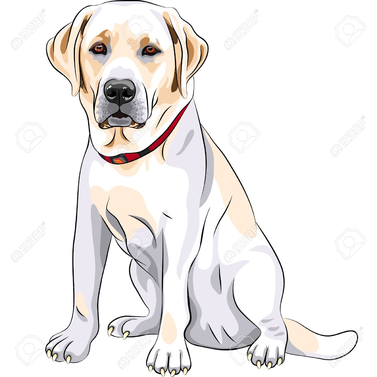 Labrador clipart #11, Download drawings