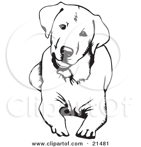 Labrador Retriever clipart #2, Download drawings