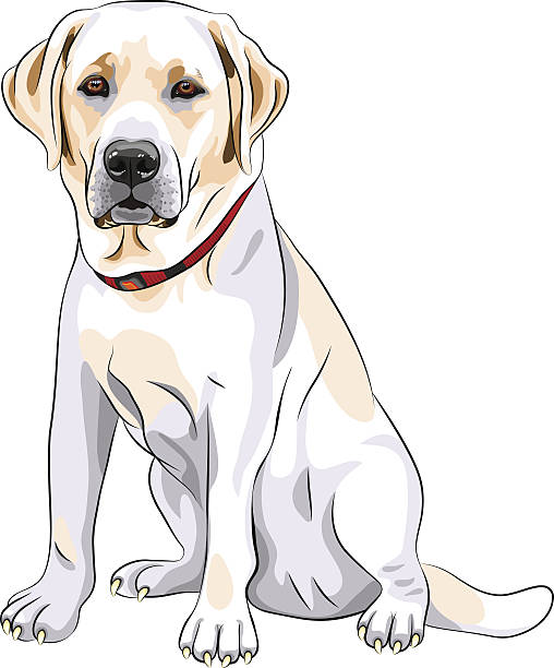 Labrador Retriever clipart #19, Download drawings