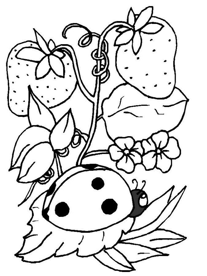 Ladybug coloring #5, Download drawings