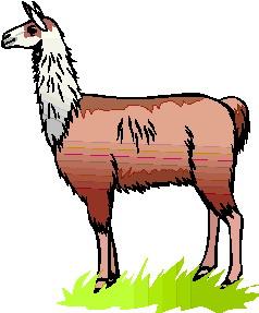 Lama clipart #20, Download drawings