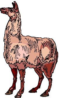 Lama clipart #12, Download drawings