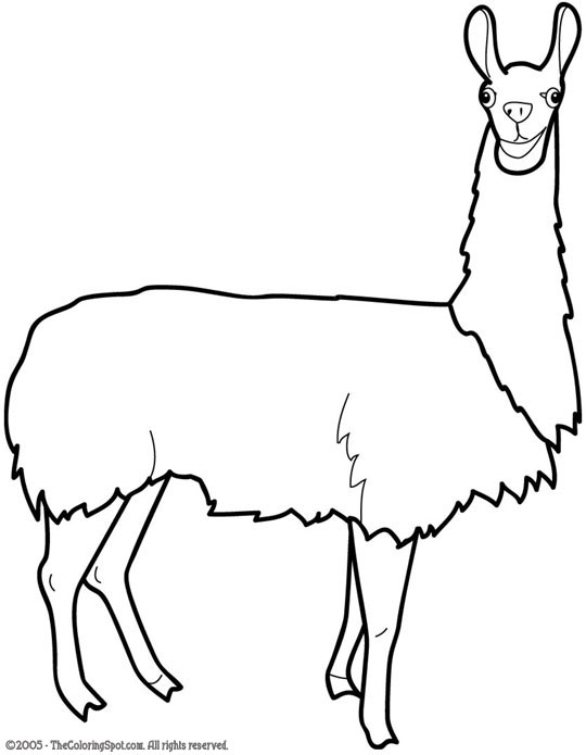 Lama coloring #1, Download drawings
