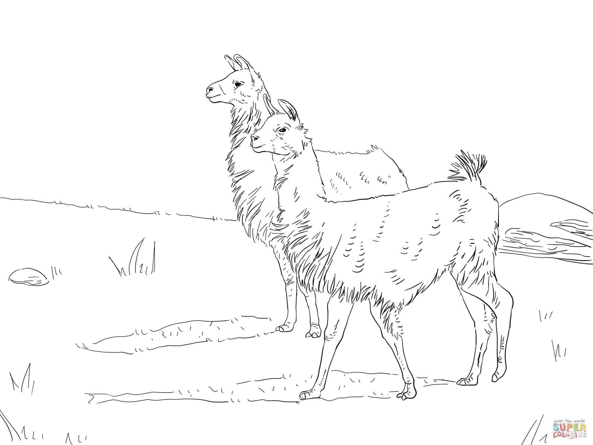 Llama coloring #14, Download drawings
