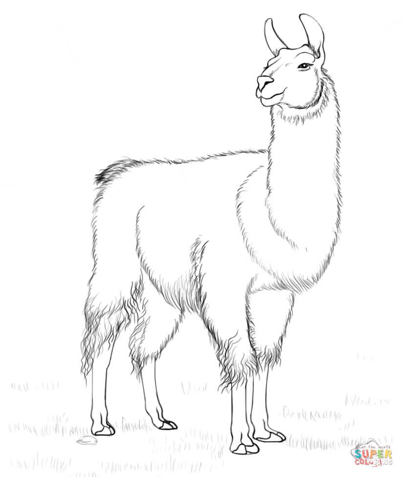 Llama coloring #12, Download drawings