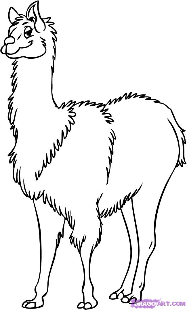 Lama coloring #3, Download drawings