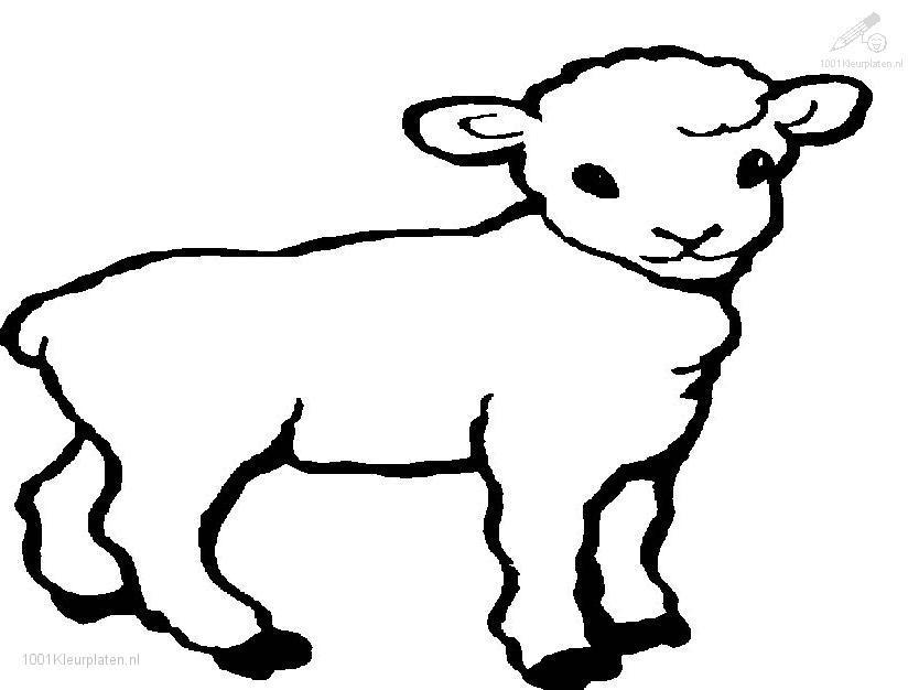 Lamb coloring #14, Download drawings