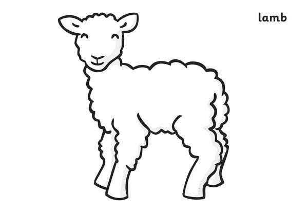 Lamb coloring #6, Download drawings