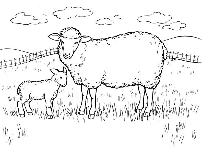 Lamb coloring #3, Download drawings