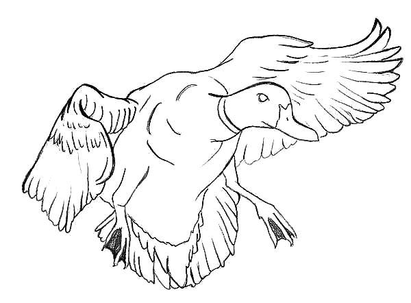 Landing coloring #17, Download drawings
