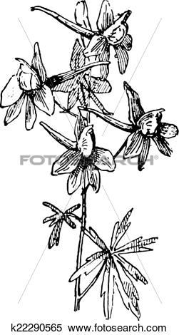 Larkspur clipart #17, Download drawings