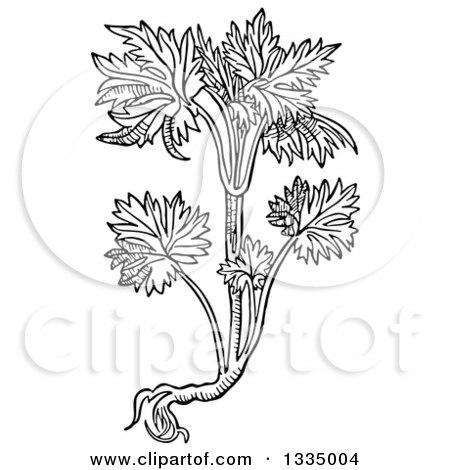 Larkspur Carmin clipart #18, Download drawings