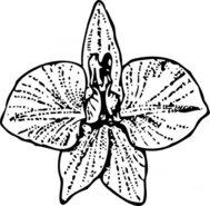 Larkspur clipart #16, Download drawings