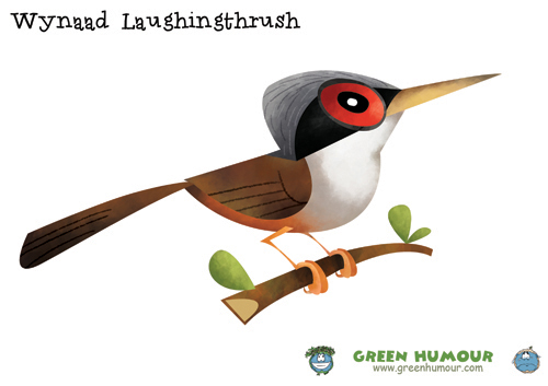 Laughningthrush clipart #7, Download drawings