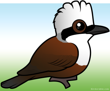 Laughningthrush clipart #14, Download drawings