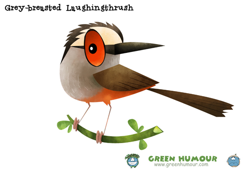 Laughningthrush clipart #1, Download drawings