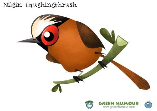Laughningthrush clipart #3, Download drawings
