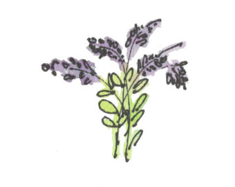 Lavender clipart #15, Download drawings