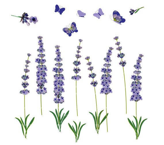 Lavender clipart #1, Download drawings