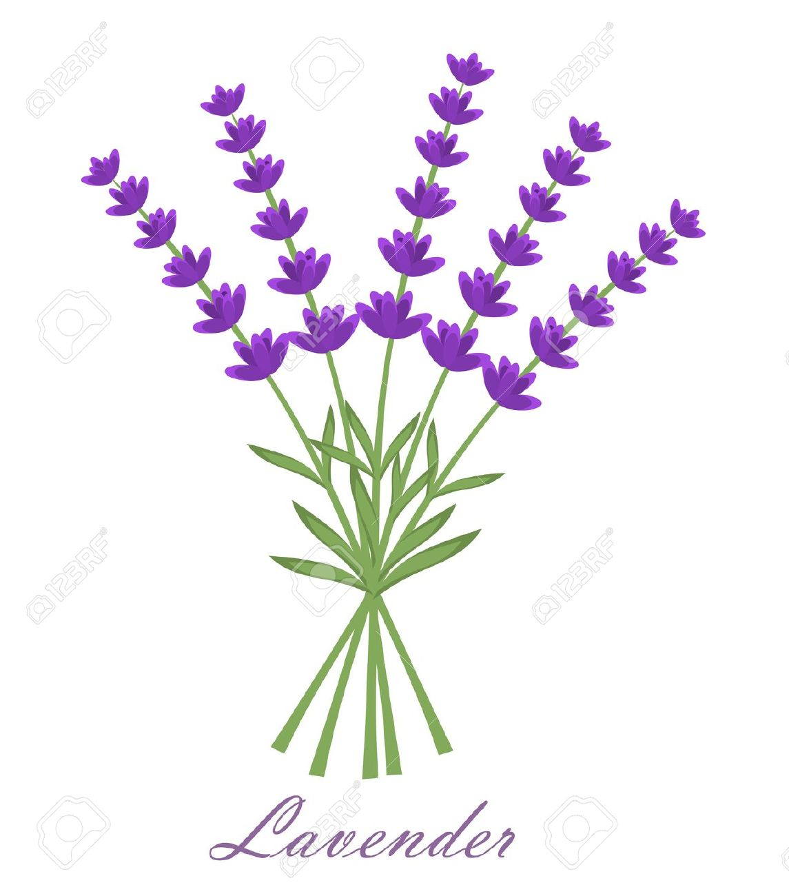 Lavender clipart #9, Download drawings