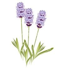 Lavender clipart #18, Download drawings