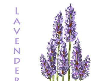 Lavender clipart #14, Download drawings