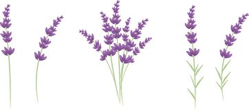 Lavender clipart #19, Download drawings