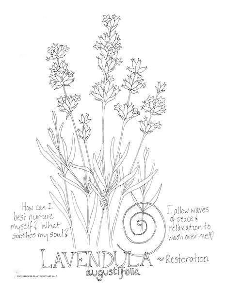 Lavender coloring #12, Download drawings