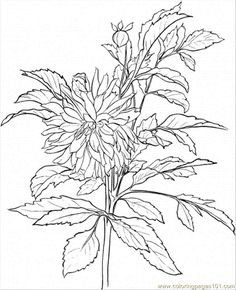 Lavender coloring #7, Download drawings
