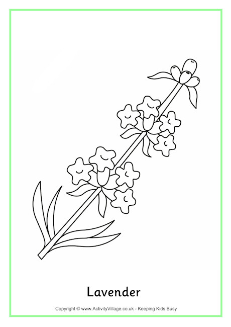 Lavender coloring #8, Download drawings