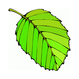 Leaf clipart #9, Download drawings