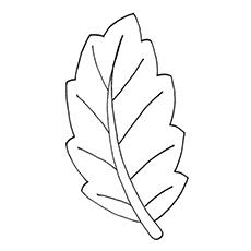 Leaf coloring #4, Download drawings