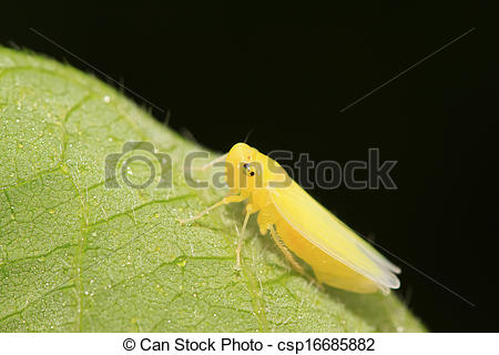 Leafhopper clipart #11, Download drawings