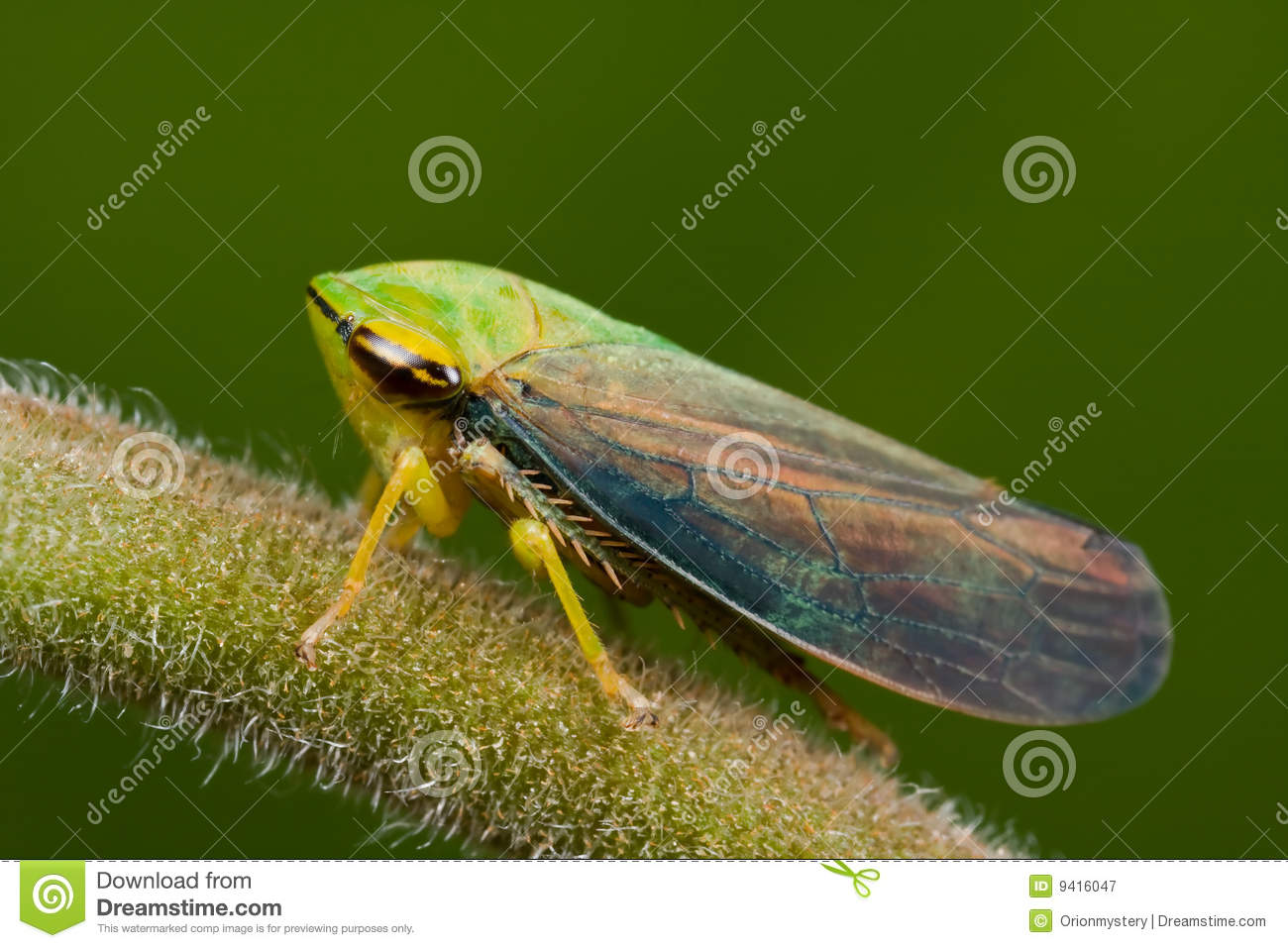 Leafhopper clipart #14, Download drawings