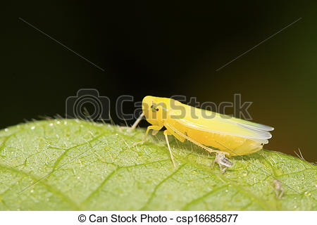 Leafhopper clipart #6, Download drawings