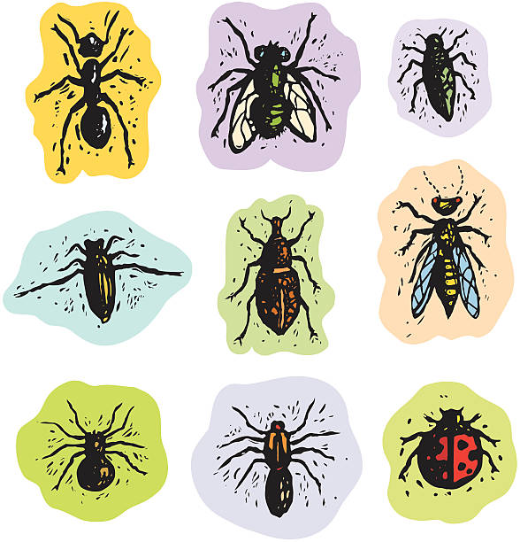 Leafhopper clipart #18, Download drawings