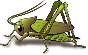 Leafhopper clipart #19, Download drawings