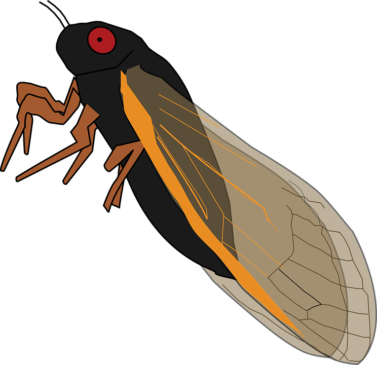 Cicada svg #2, Download drawings