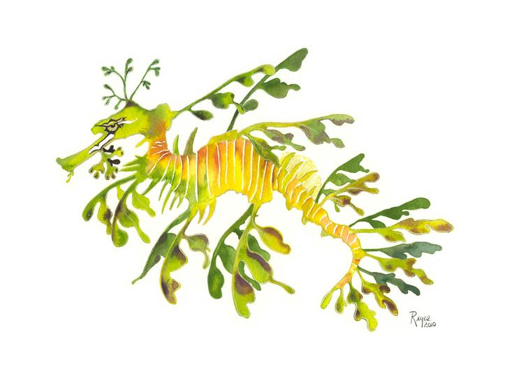 Leafy Seadragon clipart #16, Download drawings