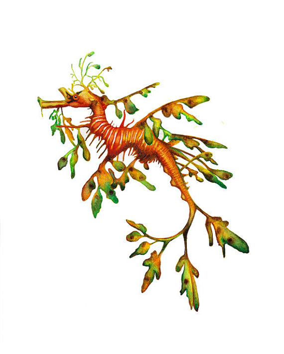 Leafy Seadragon clipart #2, Download drawings