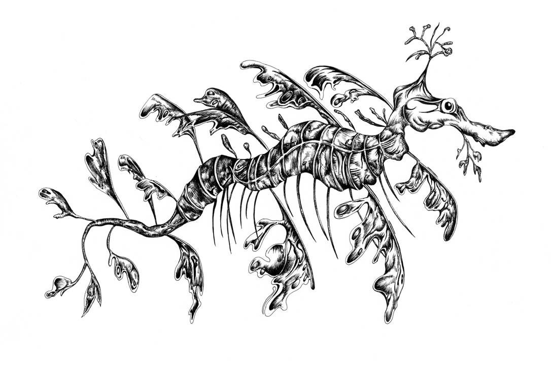 Leafy Seadragon clipart #5, Download drawings