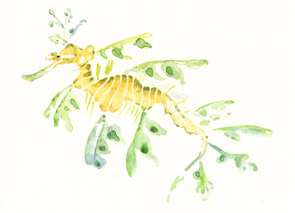 Leafy Seadragon clipart #8, Download drawings