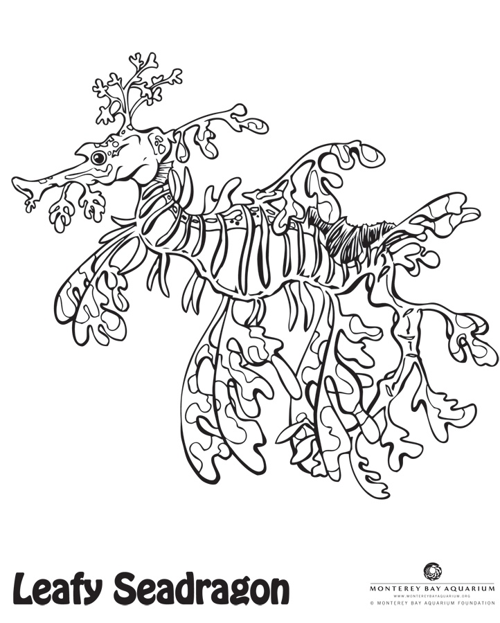 Leafy Seadragon clipart #3, Download drawings