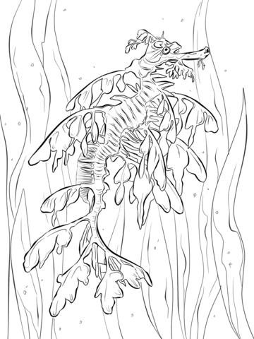 Leafy Seadragon coloring #14, Download drawings
